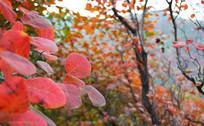 红色树叶自然景观