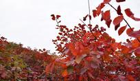 秋季树木秀美景观