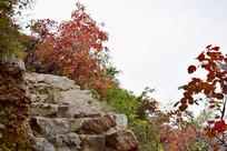 石头小路上的红色树木