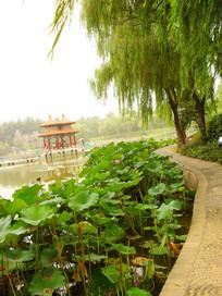 沿湖步道景观图片