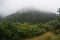 云雾中的森林