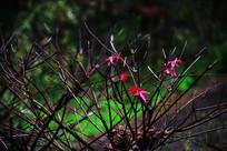 黑色枯树枝上的红色枫叶