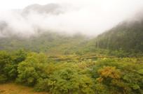 云雾缠绕的绿色树林