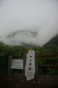 云雾下的树林