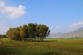 宽阔的草地上长着几棵树