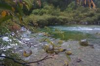 树枝后的湖水