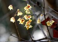 树枝上的花