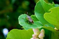 叶子上的昆虫