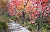 秋季的树木自然景观