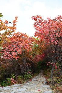 石头小路边的红叶树林