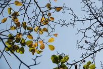 冬天的枝叶