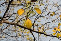 冬天树木的色彩