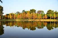 秋天的湖景风光图片