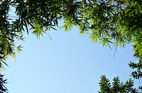 竹叶与蓝天背景素材