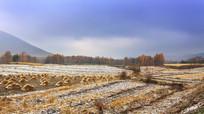 初冬残雪乡村稻田树木