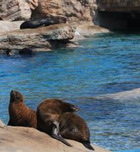 海狮享受阳光