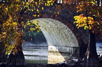 桥洞与黄叶秋色风光图片