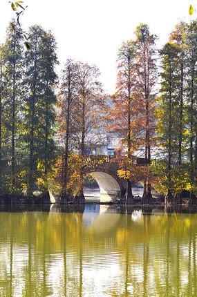 秋景树木风景图片