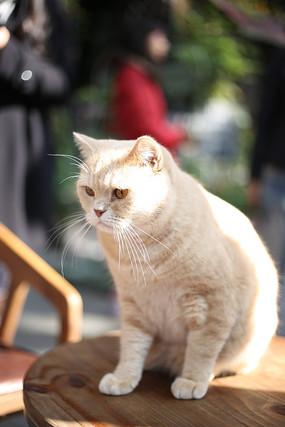 阳光下坐在桌子上的猫