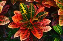 红色花草叶子