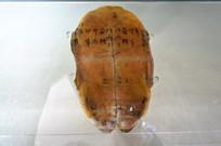 古代的龟甲文字记载