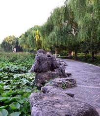 荷塘与公园小路图片
