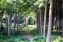 阳光透射的树林景观