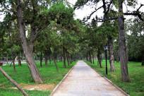 幽静的古寺柏树林