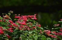 红色小花风景图片