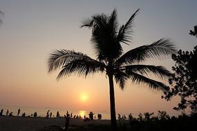 沙滩与乐人及椰子