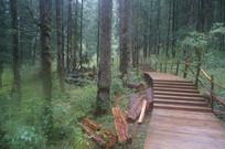 树林里砍伐的树木
