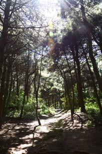 透过树林的阳光