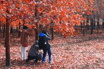 红枫树下摄影