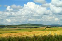 田野农田金色的秋景