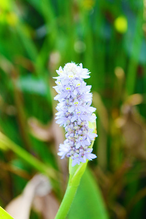 淡紫色花卉