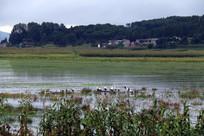 房屋外是一片湿地