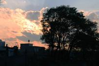 夕阳下的一棵树