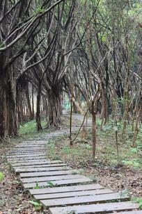 林间小路风景图片