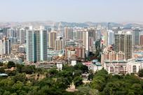 绿树映衬下的现代城市