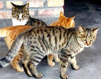 三只小花猫