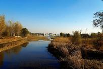 秋天的湿地风光