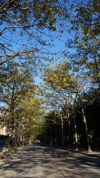 马路两边的树木