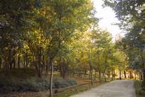 茂密的树林