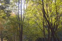 茂密的树木林