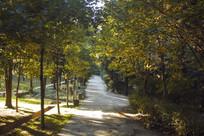秋天的树林与小路