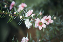 枝头几朵淡红色的小花朵