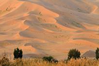 沙漠生态风光
