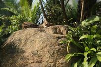 谁在石头上晒太阳的猫