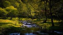 树林中的小河流