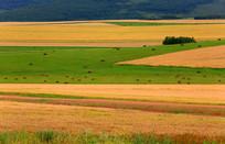 秋季麦田草场
